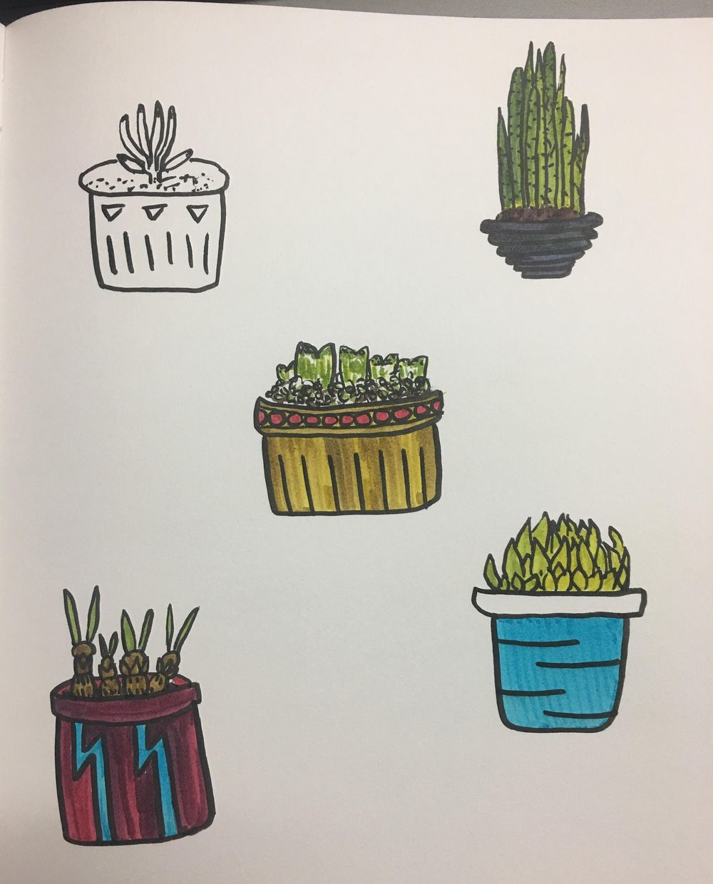 Cacti love - image 4 - student project