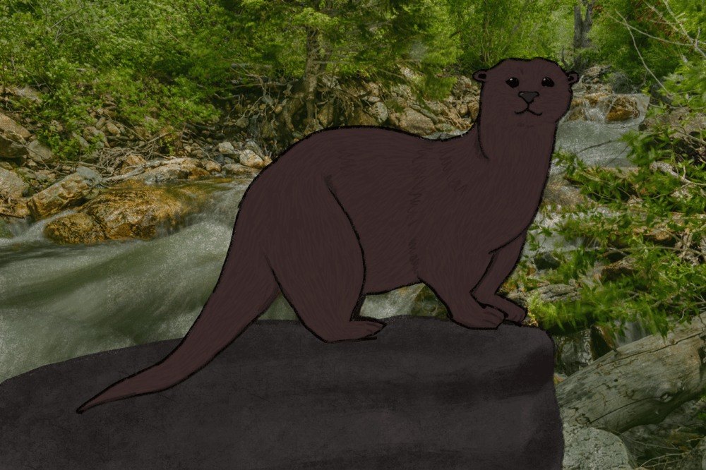 Otter - image 1 - student project