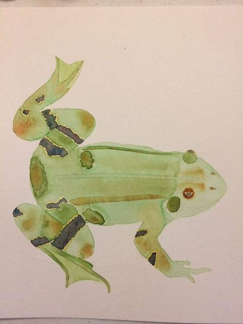 Lily Frog - image 2 - student project