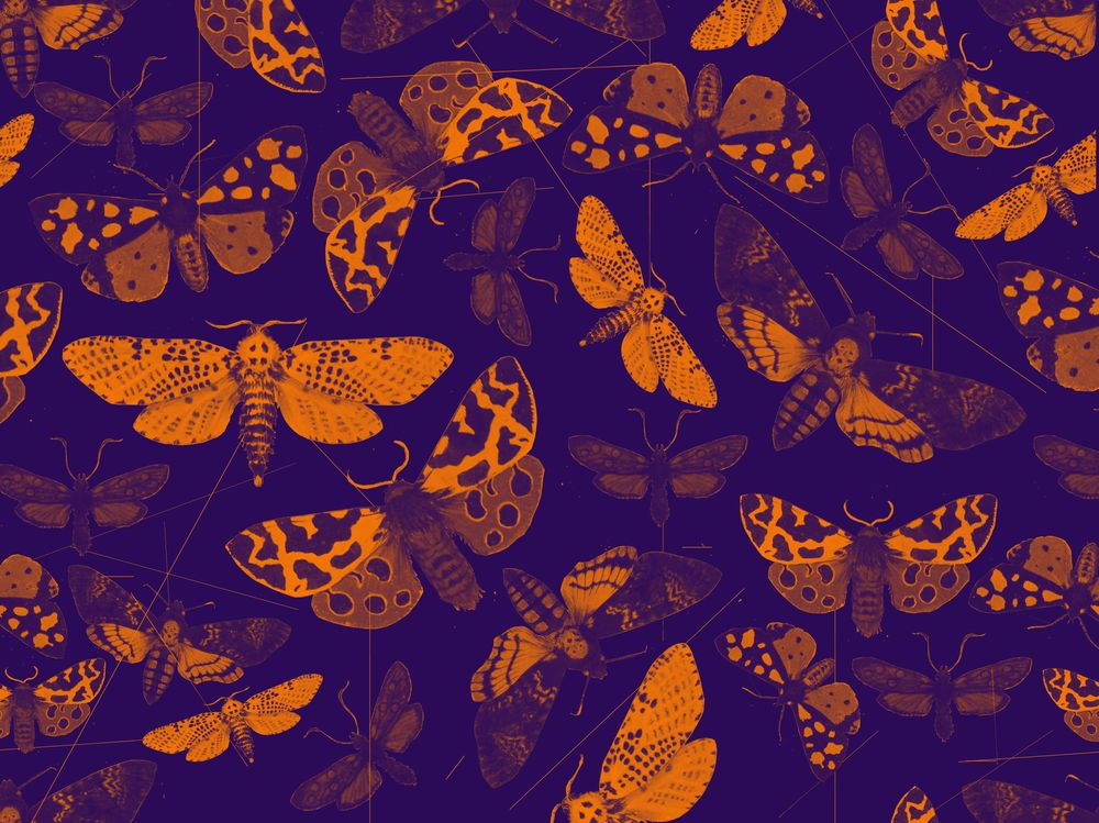 Night butterfly pattern - image 2 - student project