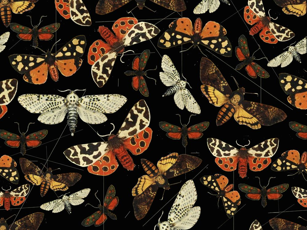 Night butterfly pattern - image 1 - student project