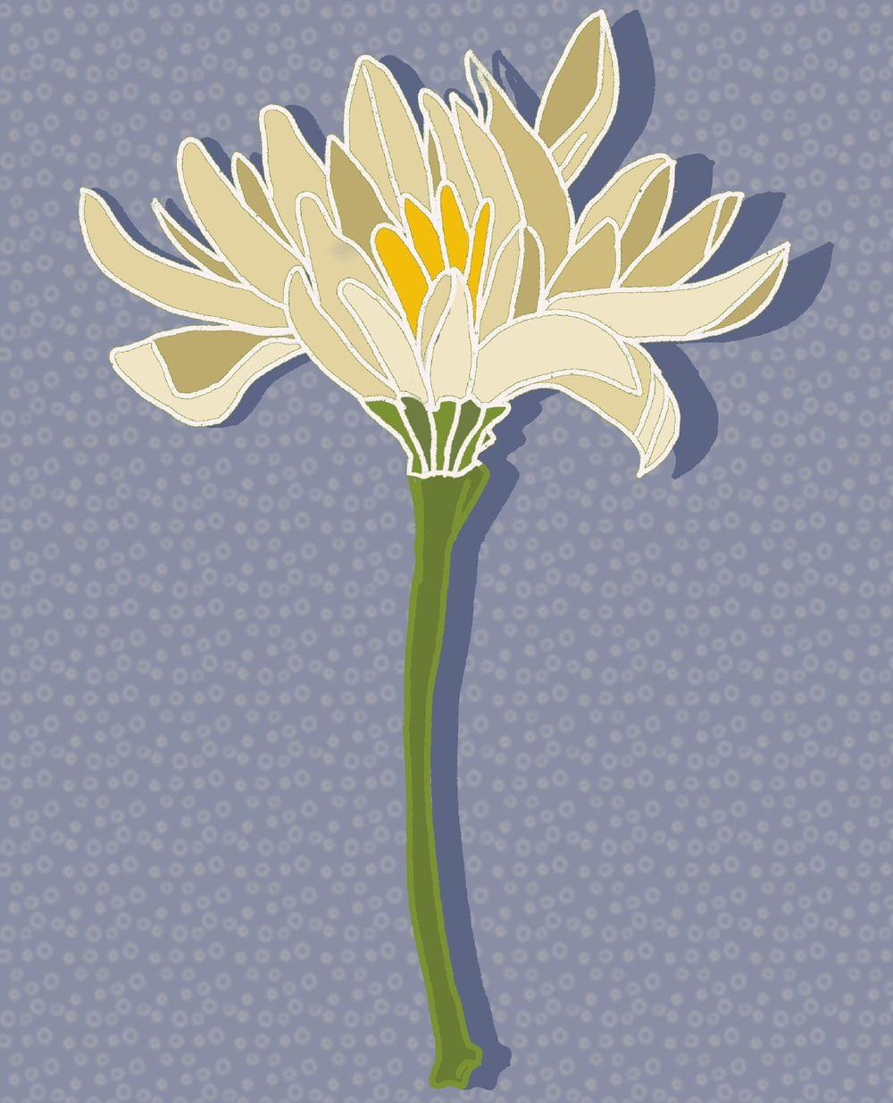 Floral album - image 2 - student project