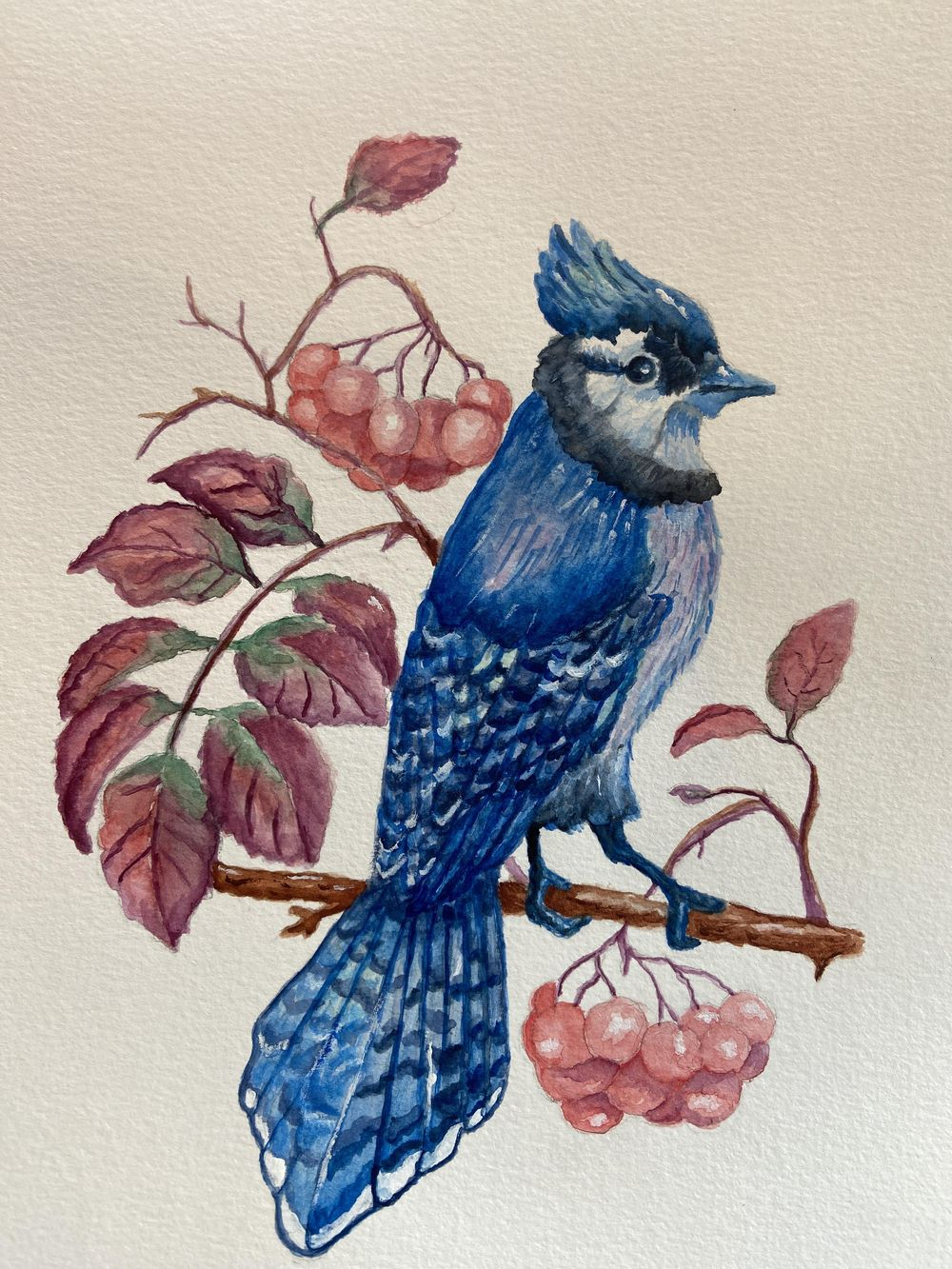 Watercolor blue jay - image 1 - student project