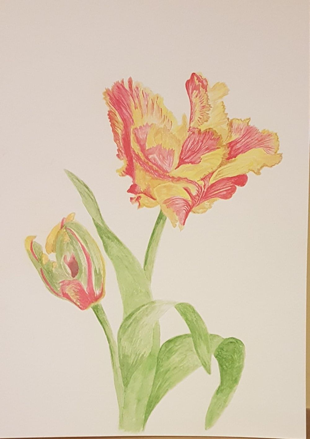 My first mixed media project - Parrot Texas Flame Tulips - image 2 - student project