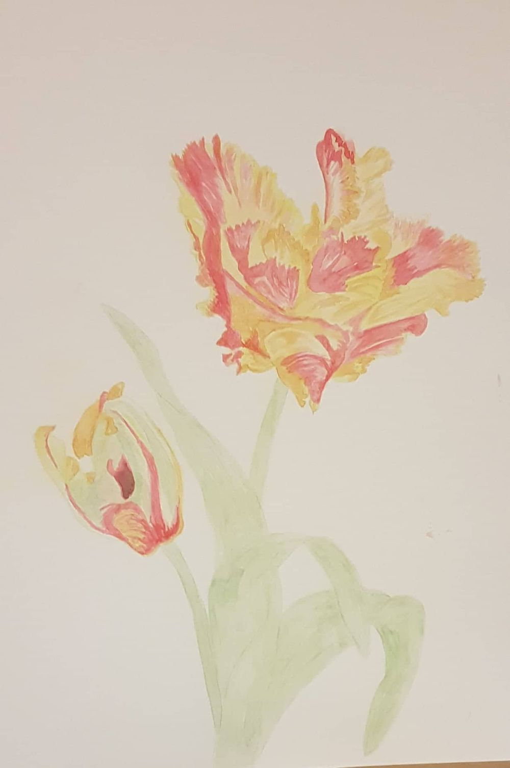 My first mixed media project - Parrot Texas Flame Tulips - image 1 - student project