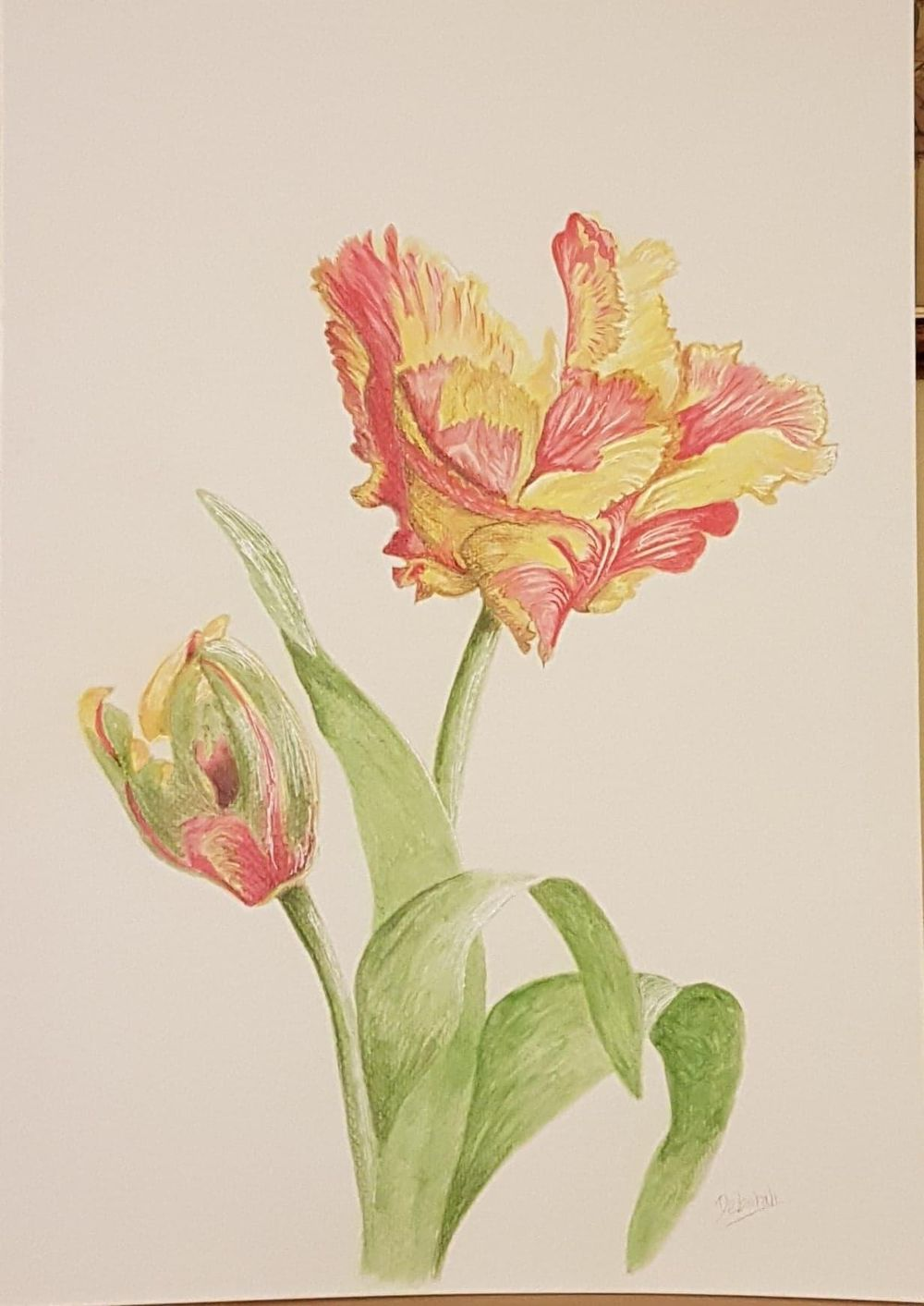 My first mixed media project - Parrot Texas Flame Tulips - image 3 - student project