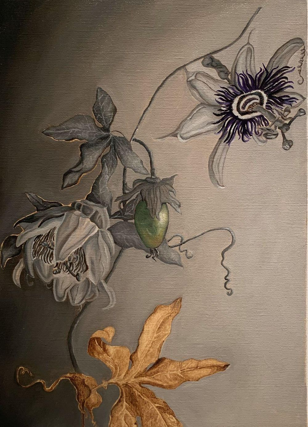 Passiflora Grisaille - image 2 - student project
