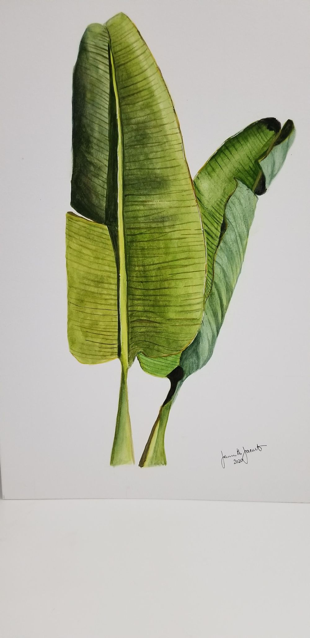 Watercolor Botanical - image 1 - student project