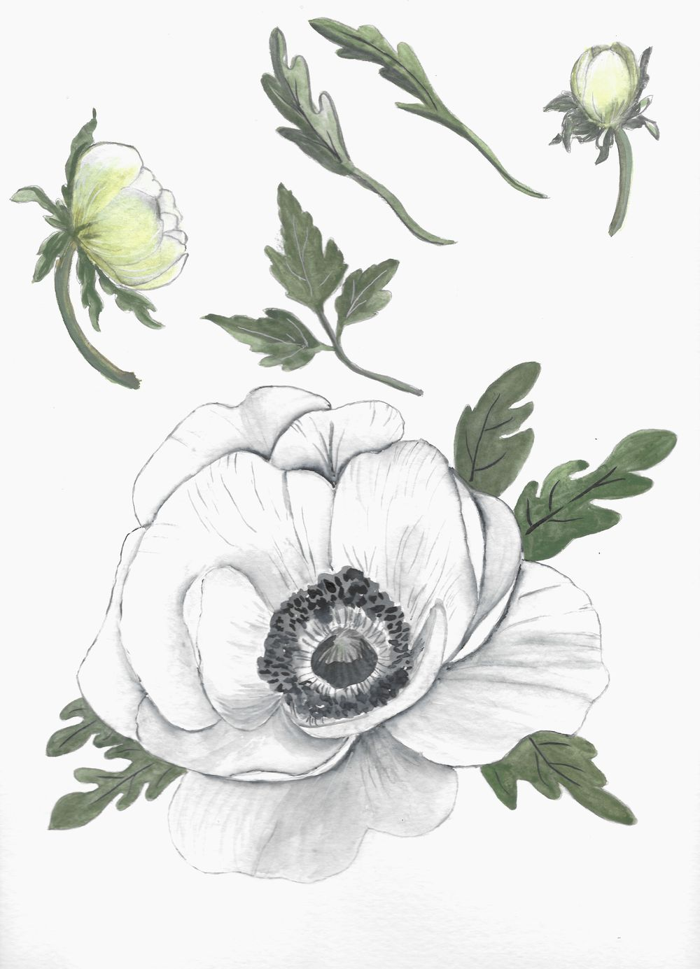 Anemone Wedding Suite Template - image 1 - student project