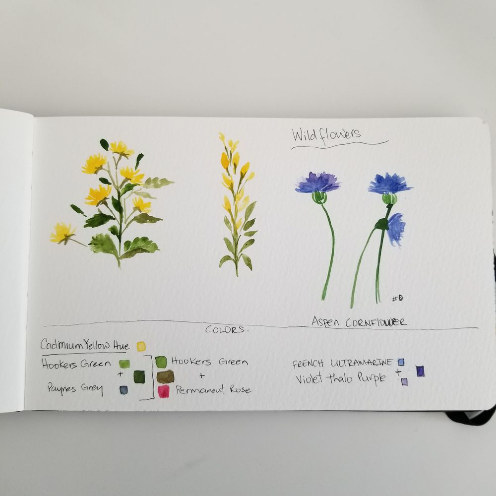 Spring Wildflowers - image 4 - student project