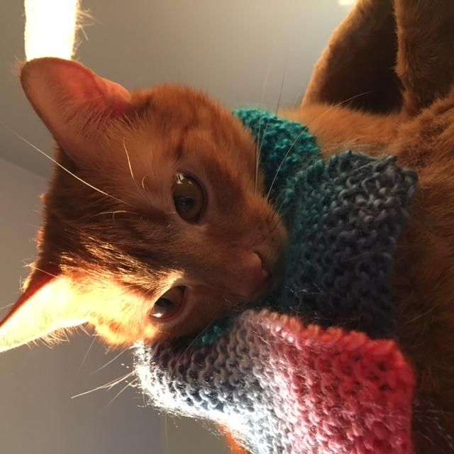 A scarf for my cat - image 2 - student project