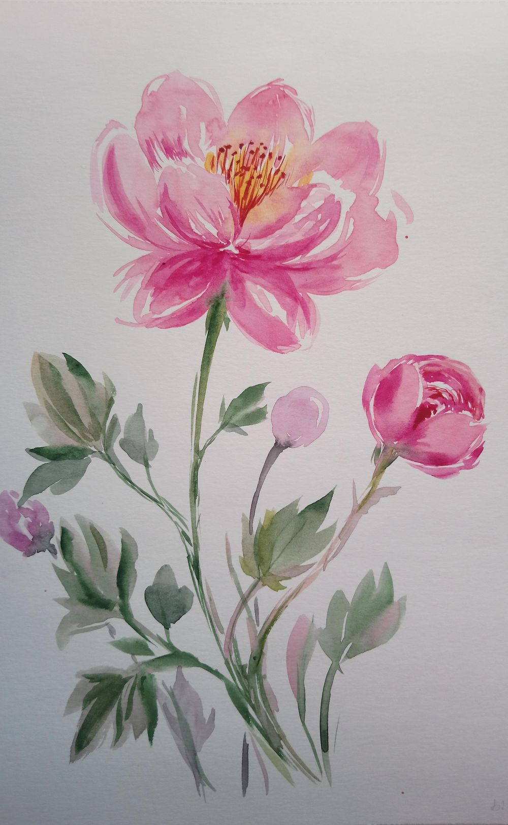 Easy-to-Learn: Loose Watercolor Peonies - image 2 - student project