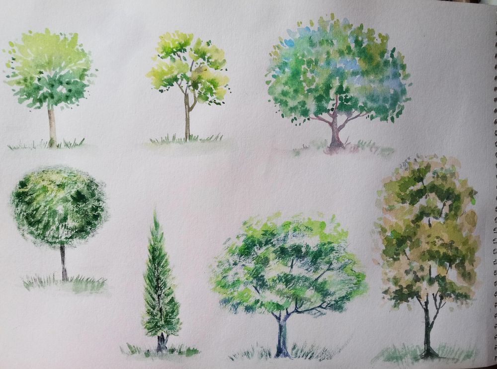 Watercolour Greenery: How to Paint Trees - image 2 - student project