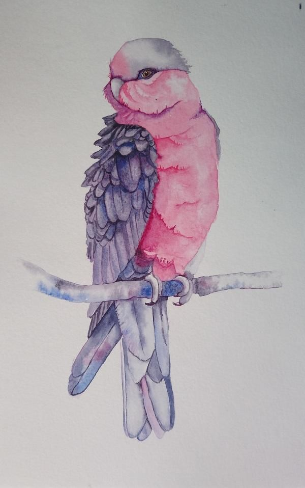 Master Watercolour Techniques: Learn to Paint a Galah in Watercolour - image 1 - student project