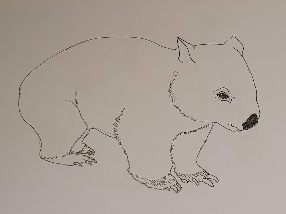 Willie Wombat - image 1 - student project