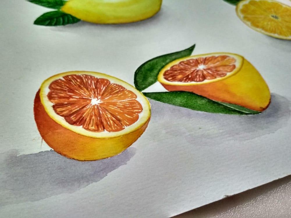 Citrus fruits - image 3 - student project