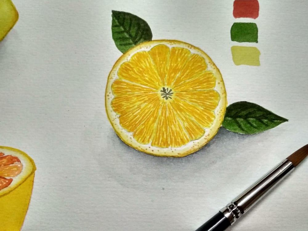 Citrus fruits - image 4 - student project
