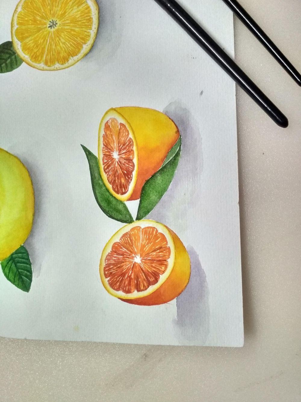 Citrus fruits - image 1 - student project