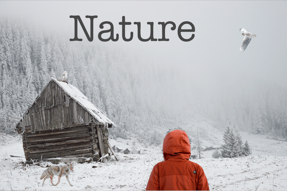 Nature - image 1 - student project