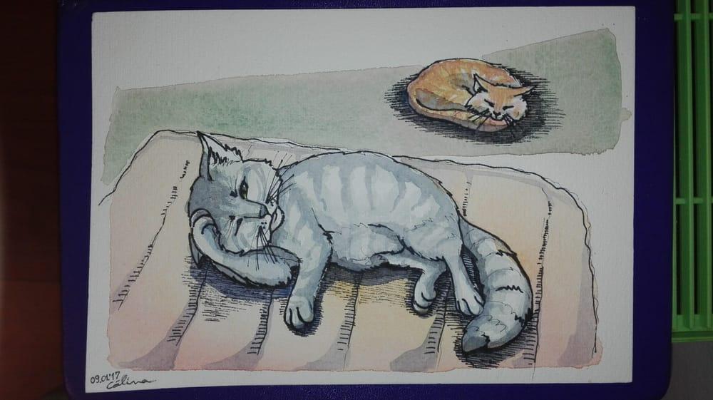 Danila - The greatest tomcat - image 2 - student project