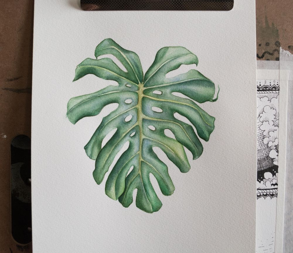 Botanical Watercolor - Monstera Leaf - image 1 - student project