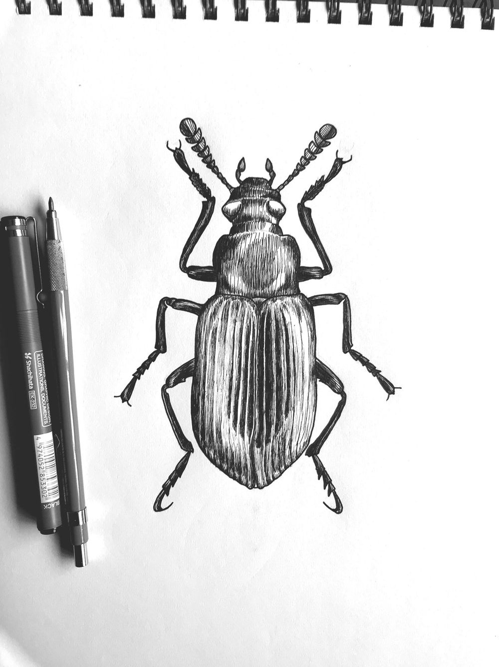 Pen & Ink Beetle - image 2 - student project
