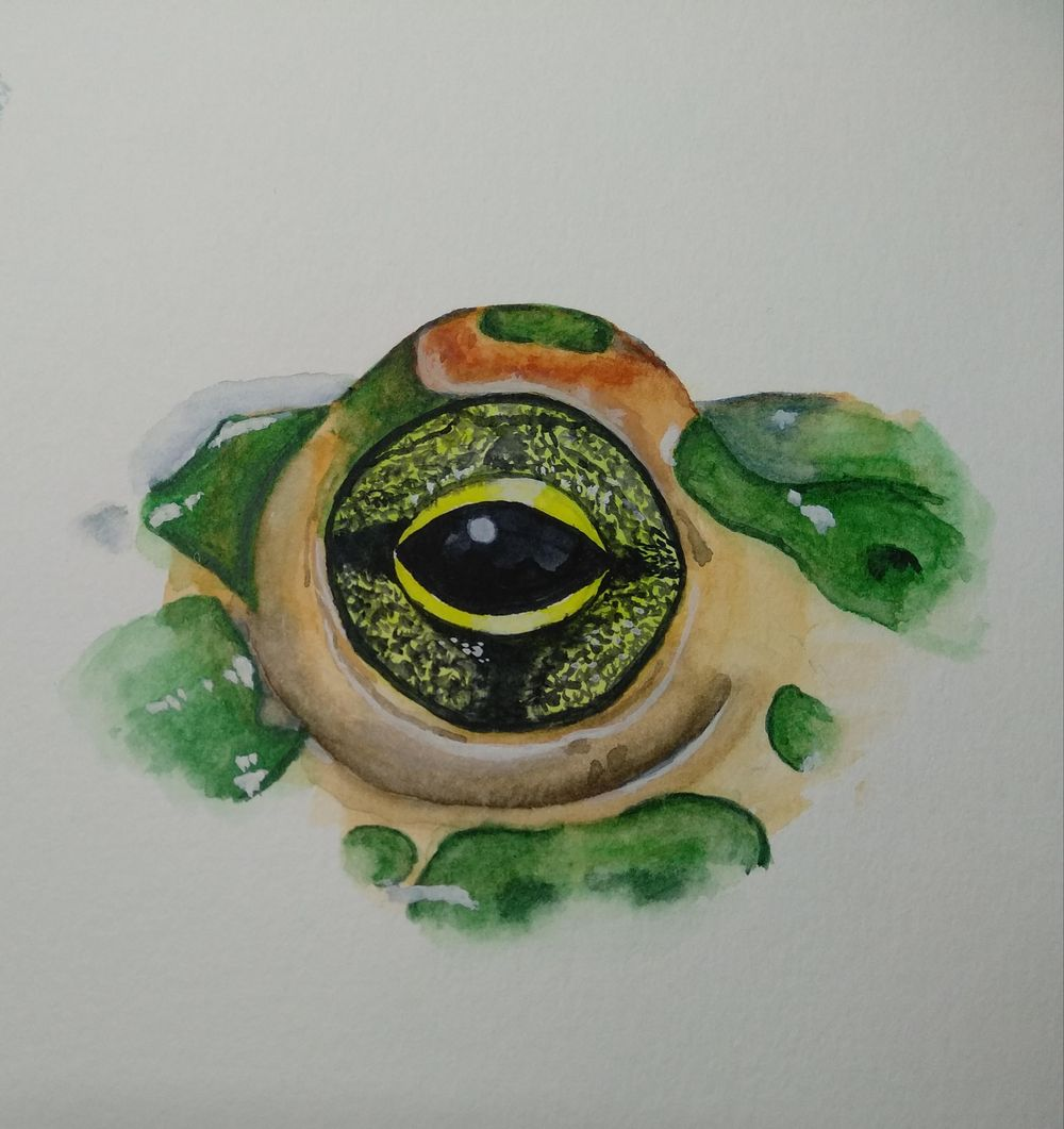 Eyes - image 5 - student project