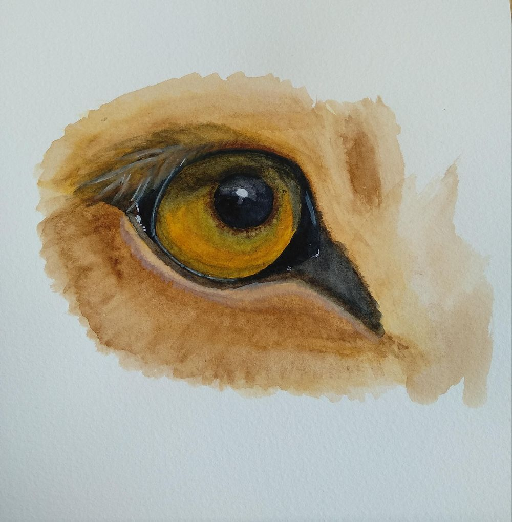 Eyes - image 6 - student project