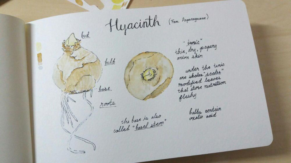 Starting a nature sketchbook - image 2 - student project