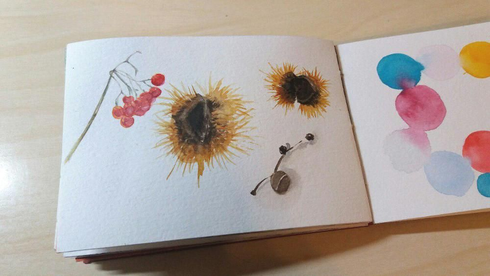Starting a nature sketchbook - image 1 - student project