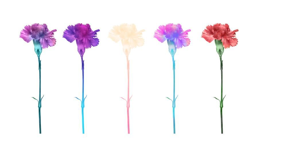 Affinity flowers - image 2 - student project