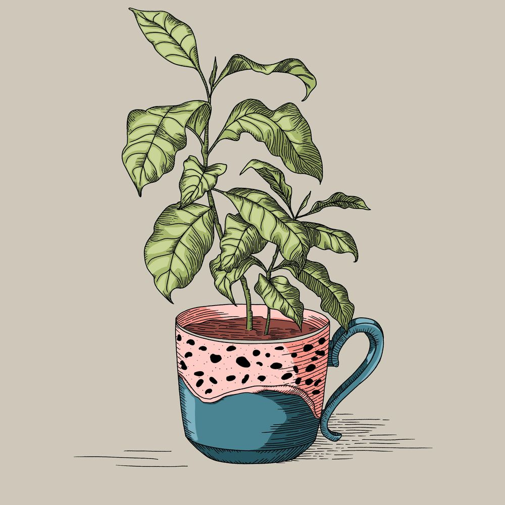 Coffee plant - image 3 - student project