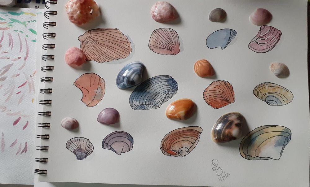 Shells with water colours - image 1 - student project