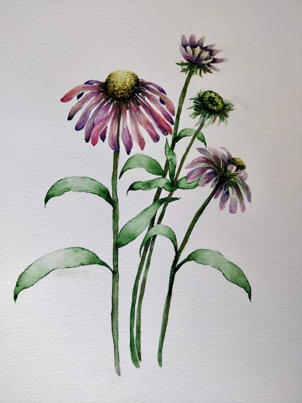 Paint with Me: Vintage-Inspired Botanical Illustration Using Mixed Media - image 4 - student project