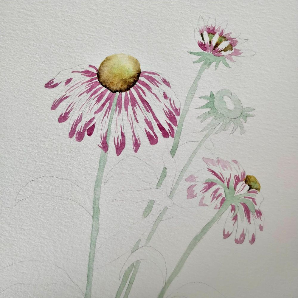 Paint with Me: Vintage-Inspired Botanical Illustration Using Mixed Media - image 2 - student project