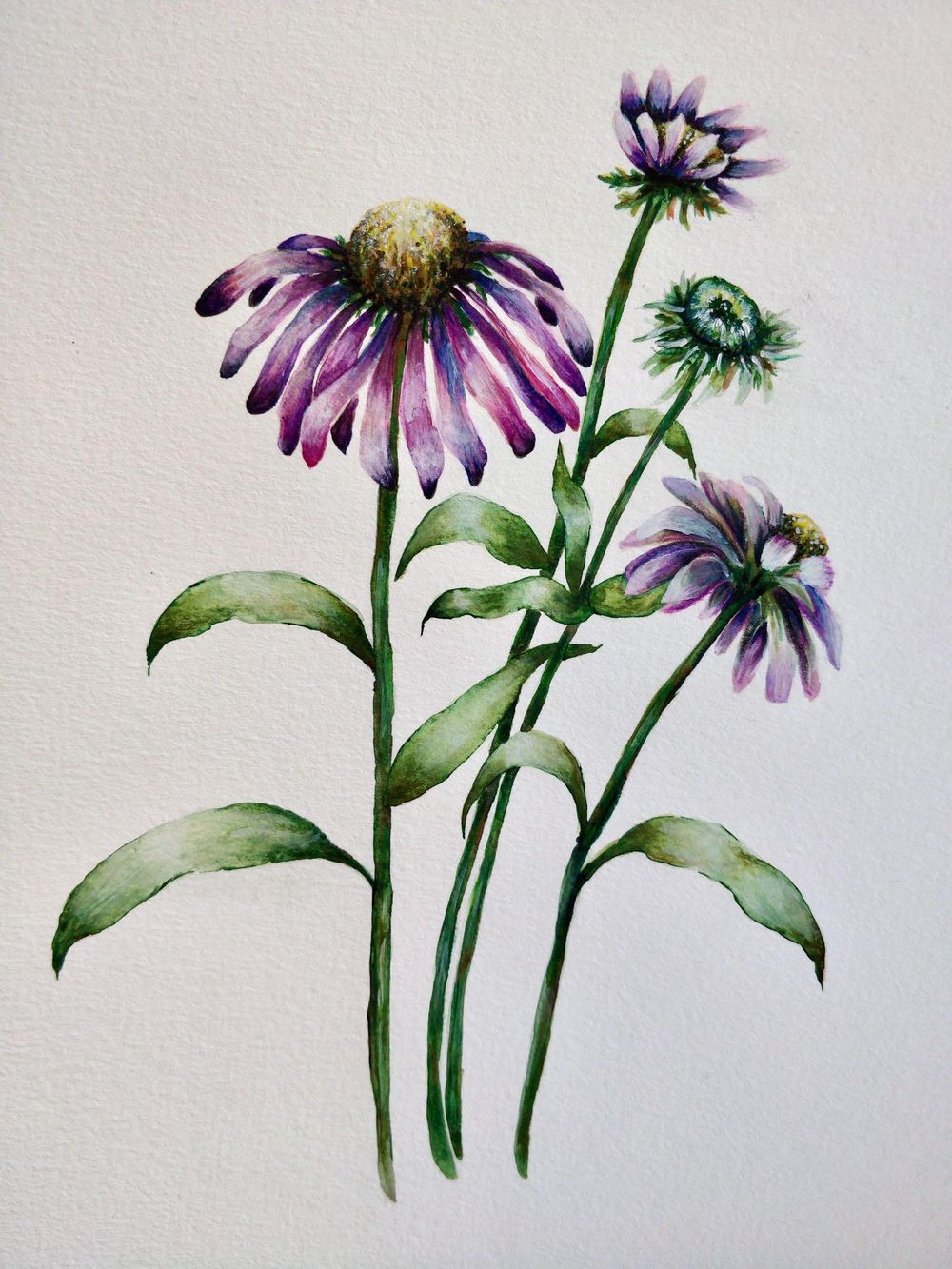 Paint with Me: Vintage-Inspired Botanical Illustration Using Mixed Media - image 6 - student project
