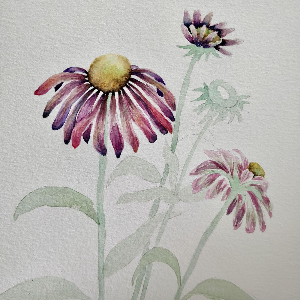 Paint with Me: Vintage-Inspired Botanical Illustration Using Mixed Media - image 3 - student project