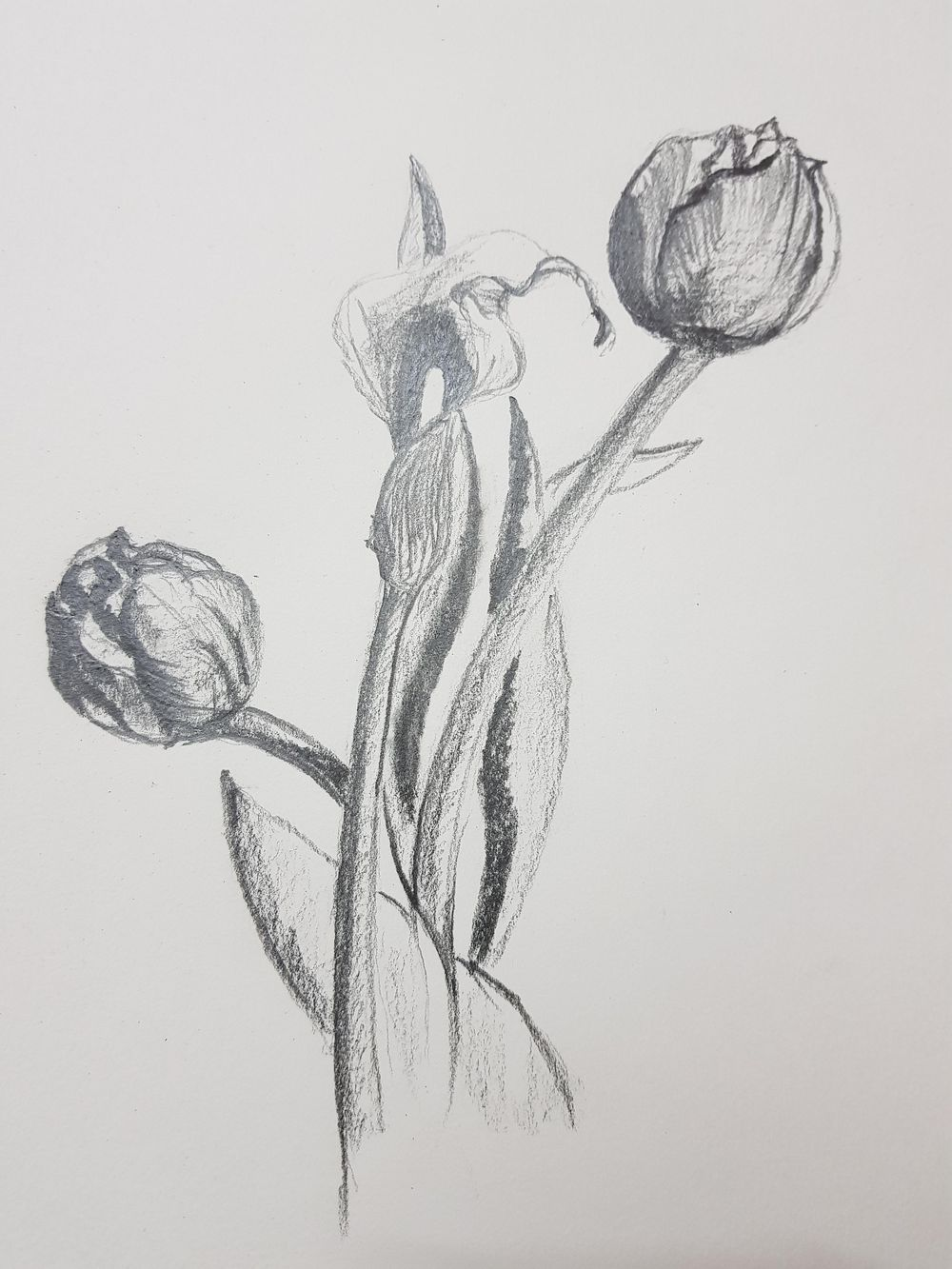 The Basic Skills - The Art & Science of Drawing - image 4 - student project