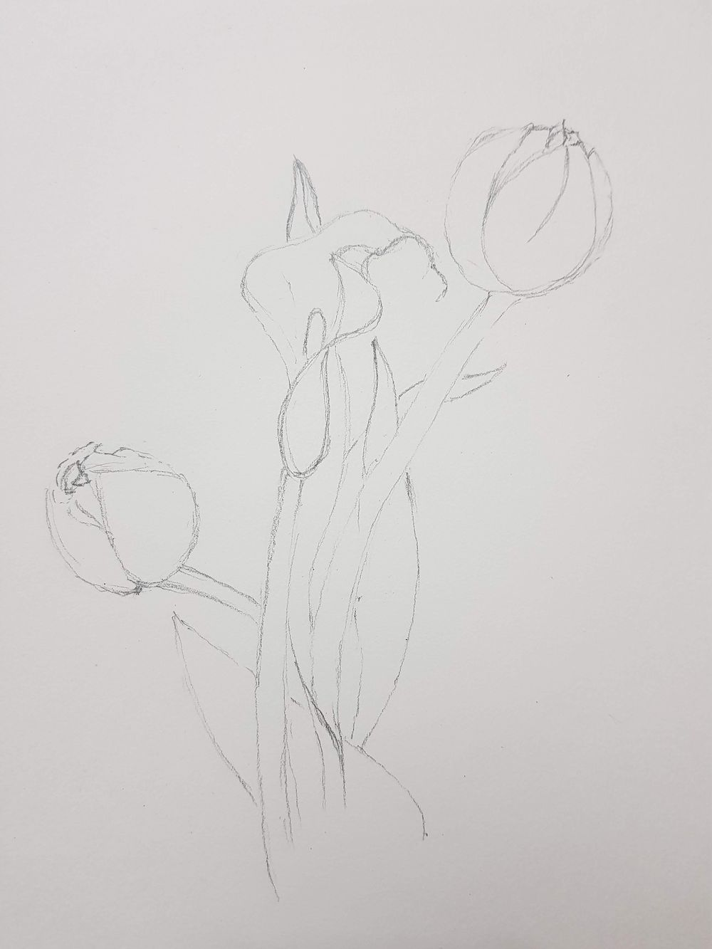 The Basic Skills - The Art & Science of Drawing - image 5 - student project