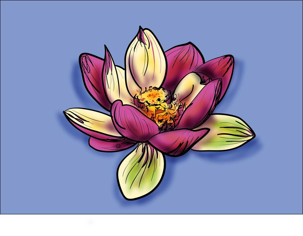 Lotus and Calla Lily - image 2 - student project