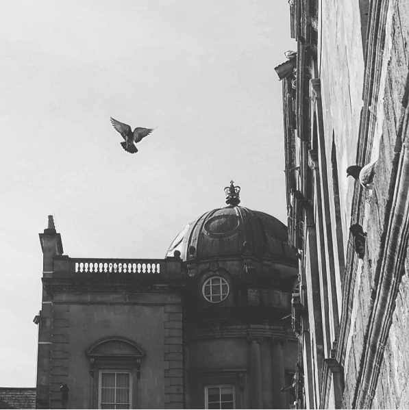 Pigeon flying - image 2 - student project