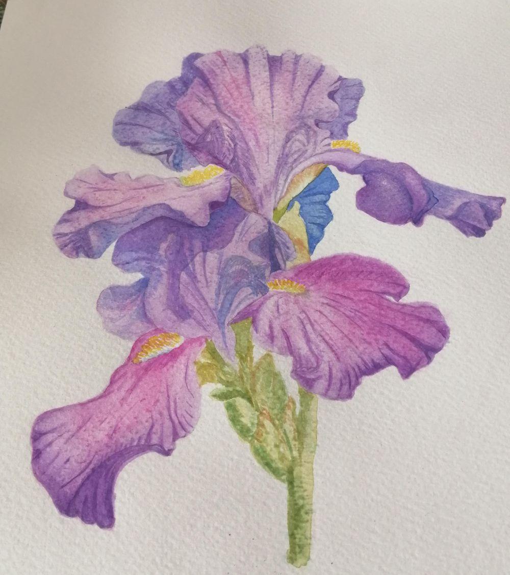 Iris - image 1 - student project