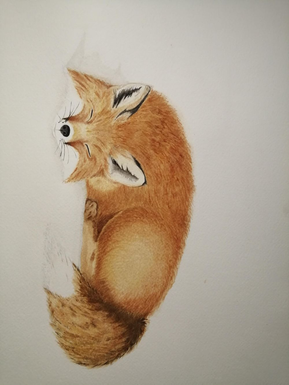 Fox - image 1 - student project