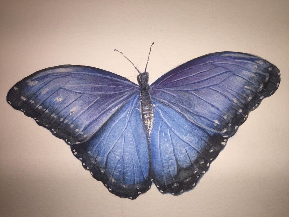 Watercolor Pencil Blue Morpho Butterfly - image 1 - student project