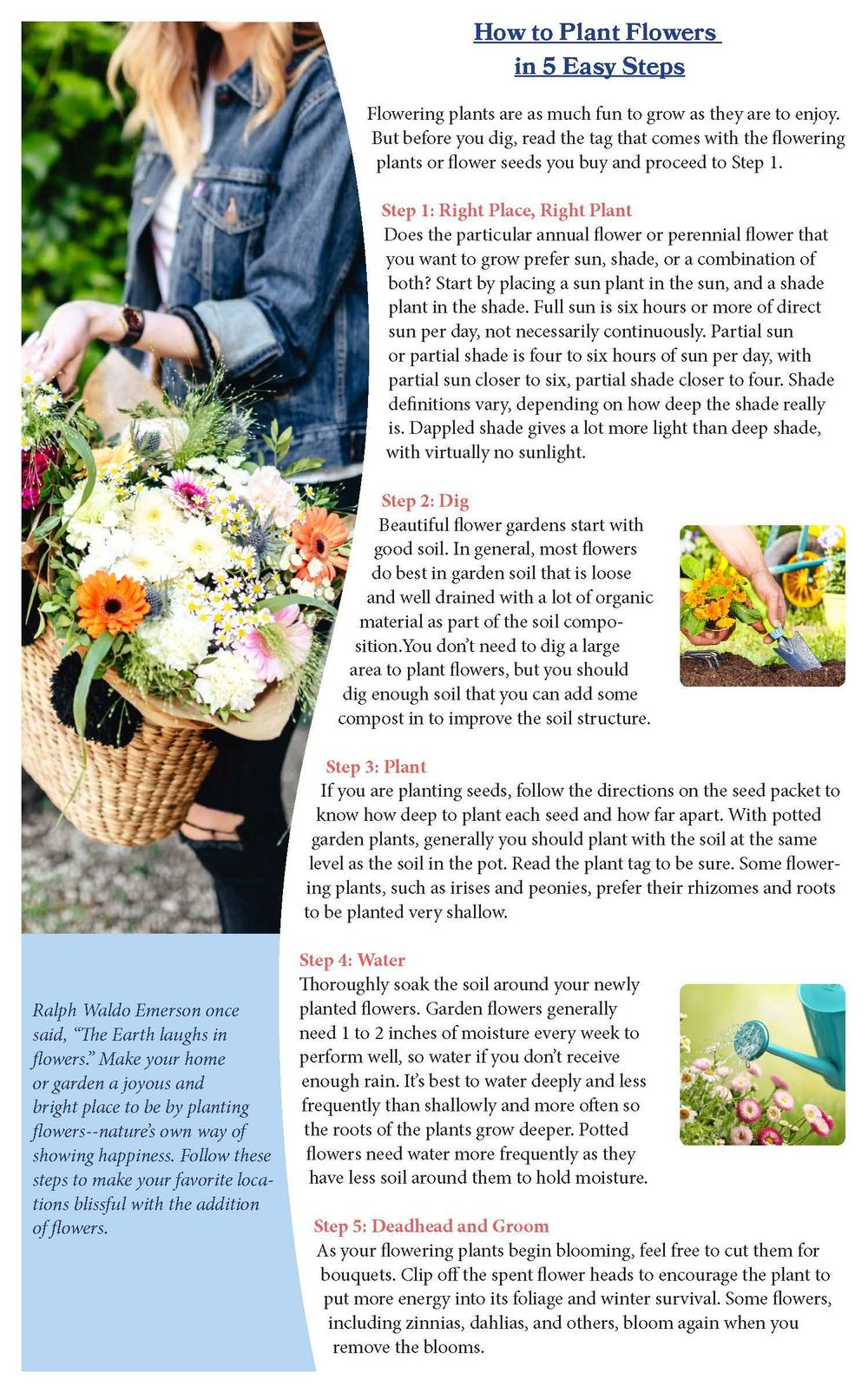Newsletter Layout - image 1 - student project