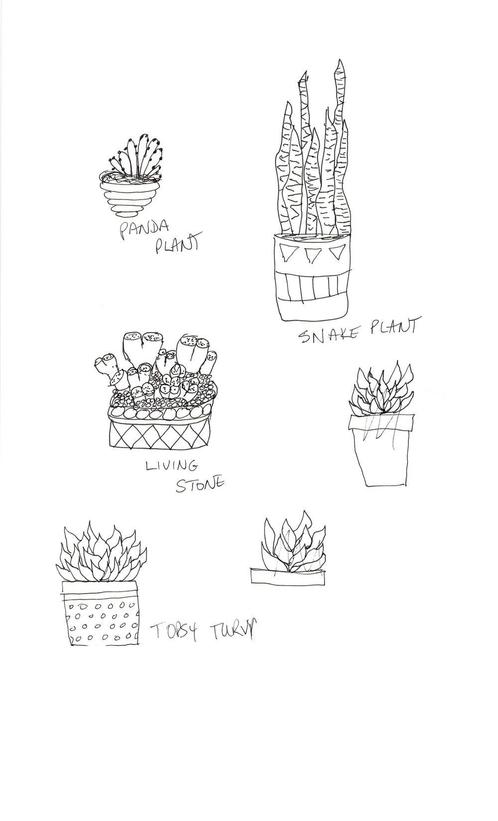 Practice Practice Practice Cactus cactus cactus. - image 6 - student project