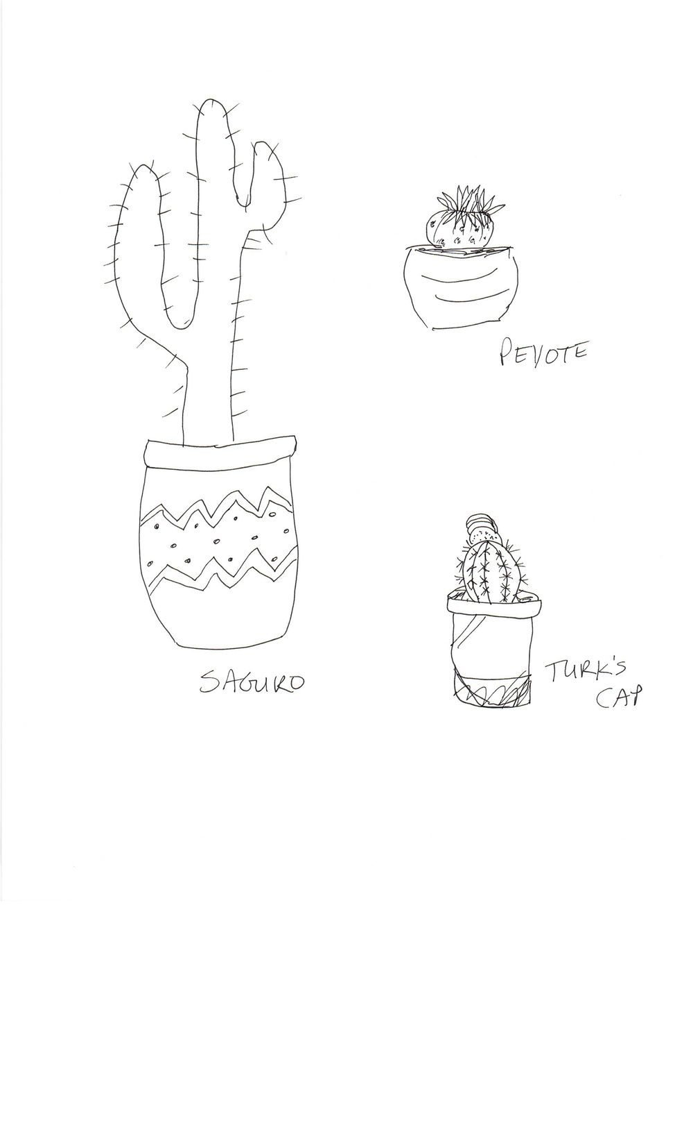 Practice Practice Practice Cactus cactus cactus. - image 8 - student project
