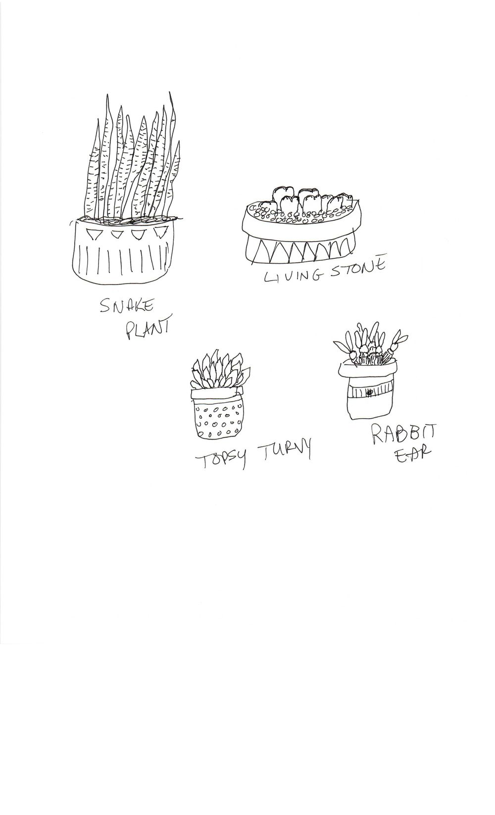 Practice Practice Practice Cactus cactus cactus. - image 2 - student project