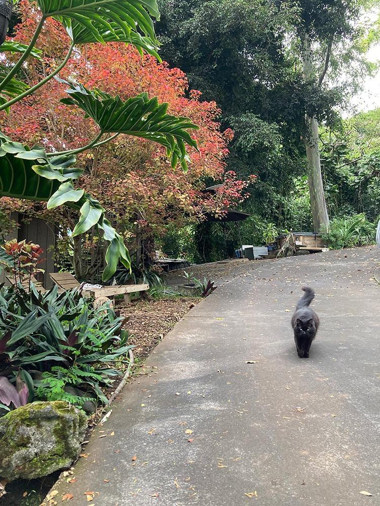 Hawaiian jungle kitty - image 1 - student project