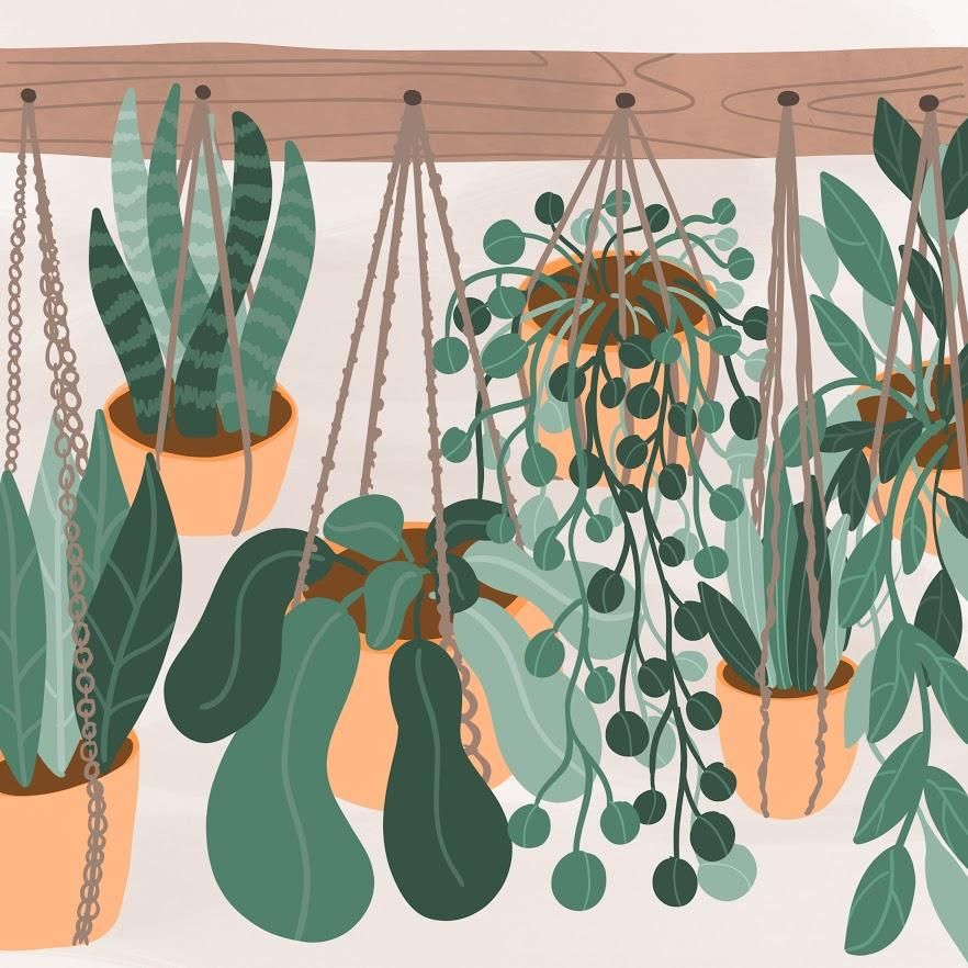 Plant Illustrations in Procreate - image 2 - student project